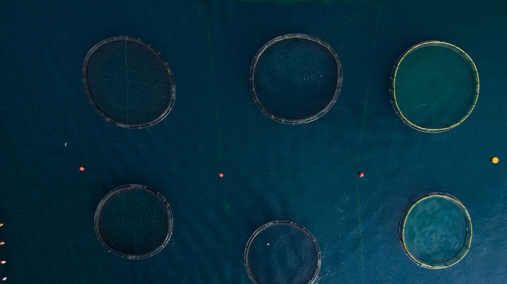 Illustrasjonsbilde fiskeoppdrett, foto: colourbox