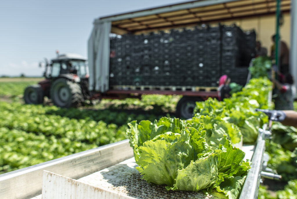 Illustrasjonsbilde med traktor og høsting av salat, foto: Colourbox