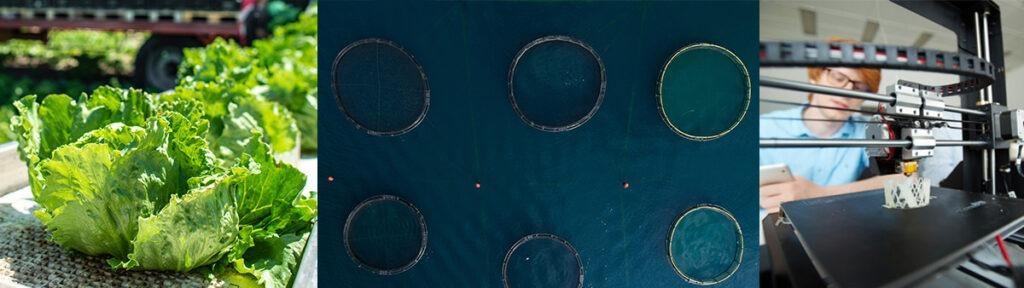 Illustrasjonsbilde landbruk, fiske og innovasjon, foto: colourbox